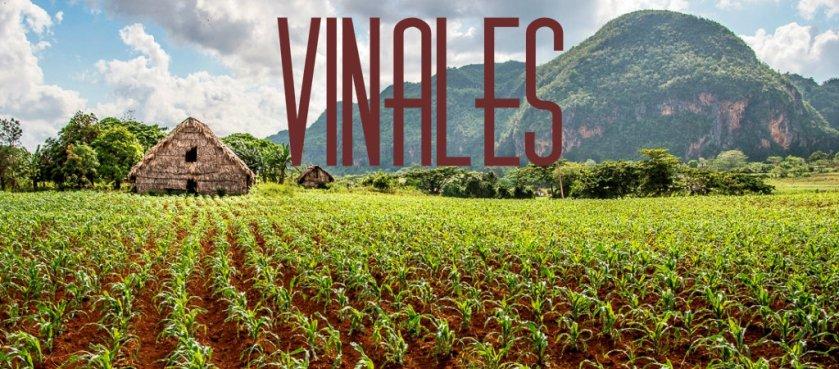 vinnales2.jpg